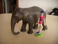 Musa e l'elefante - the-winx-club photo