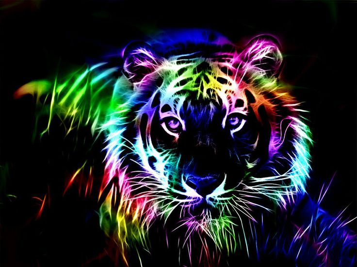 Bright Colors Images Neon Big Cat Hd Wallpaper And Background Photos