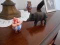 Obelix e il cinghiale