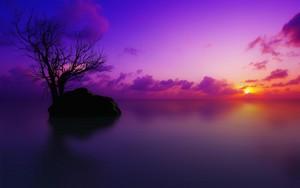 گلابی Sunsets