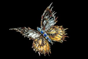 Pretty бабочка