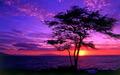 Purple Sunsets - purple wallpaper