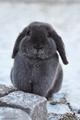 Rabbit in the Snow - bunny-rabbits photo