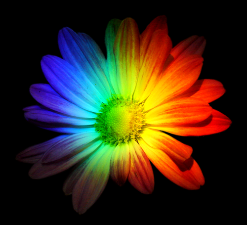 rainbow flowers wallpaper paintings - photo #42
