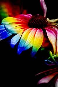 arco iris flores