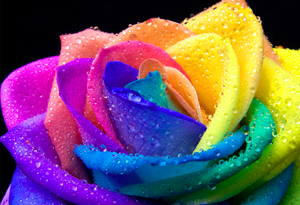 regenbogen Blumen