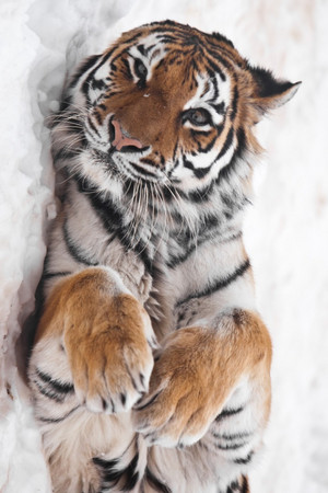 Snuggling in the Snow