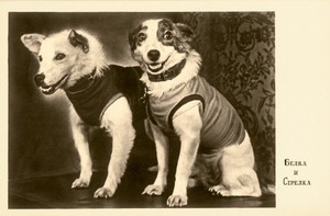 Soviet মহাকাশ Dogs: Belka and Strelka