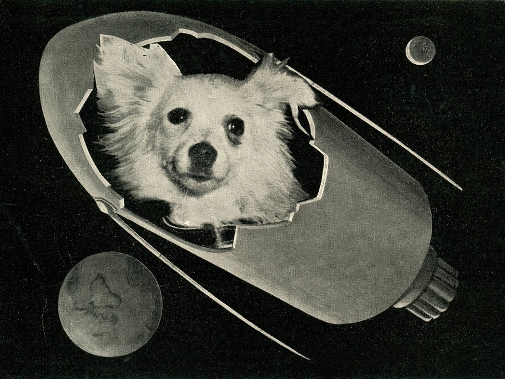 Soviet Space Dogs: Kozyavka