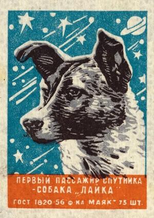 Soviet 우주 Dogs: Laika