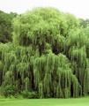 Tree - random photo
