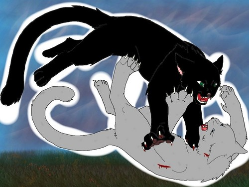 WARRIOR CATS Wallpaper Called Ashfur And Hollyleaf Fight
