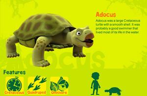 Adocus