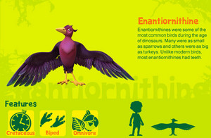 Enantiornithine
