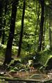 Link in the Forest - the-legend-of-zelda fan art