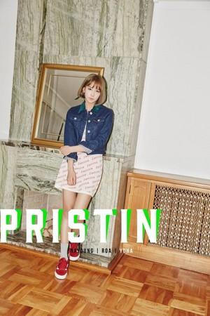 Pristin Concept 写真