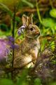 Rabbit - bunny-rabbits photo