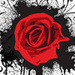 Red Rose - roses icon