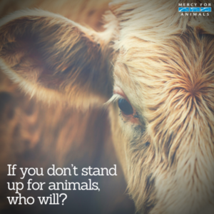 Stand Up For animais