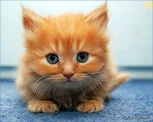 かわいい子猫