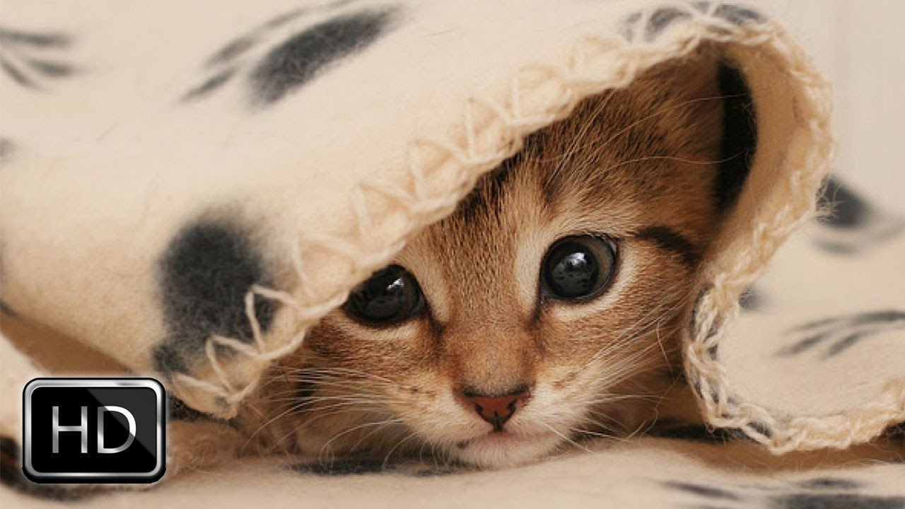 Cute kitten photo gallery
