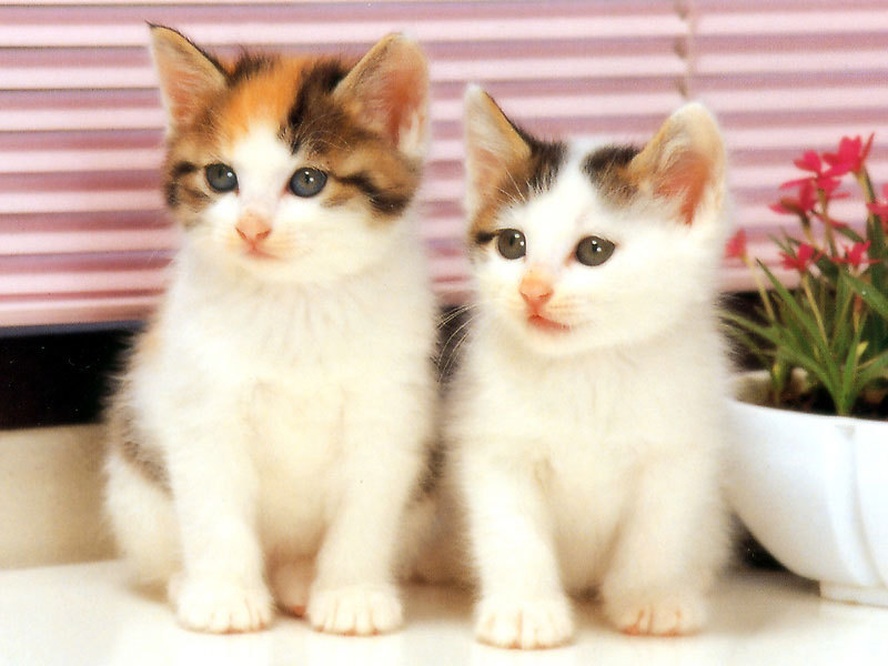 Kumpulan Gambar Gambar Kucing Gambar Kucing Terlihat Cantik
