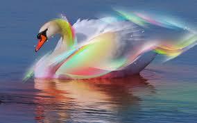 قوس قزح swans