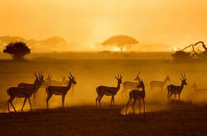 wildlife upigaji picha