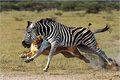 wildlife photography - photography photo