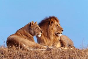 wildlife 摄影