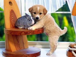 Baby Animal Buddies