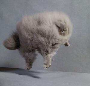 Cat litrato