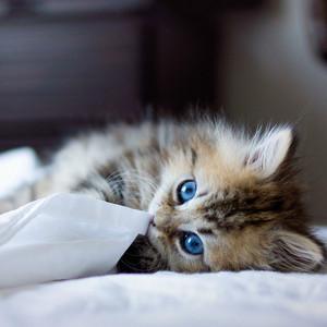 Cat picha