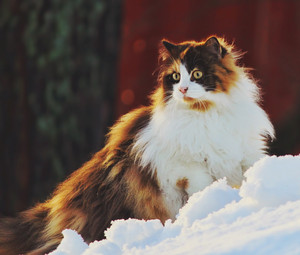 Cat bức ảnh