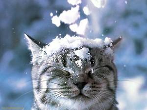 Cat фото