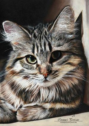 Cat 写真