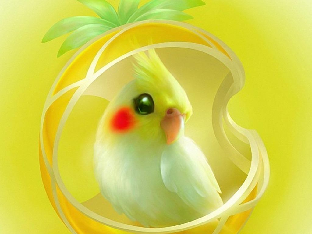 Parrots images cockatiel hd wallpaper and background photos 40433254 parrots images cockatiel hd wallpaper and background photos voltagebd Images