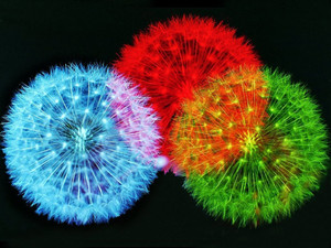 Colour Fireworks