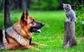 Dog and Kitten - dogs wallpaper