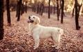 Dog - dogs wallpaper