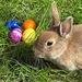 Easter Bunny - random icon