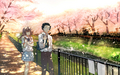 Koe no Katachi 壁纸