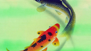 Koi 鲤鱼