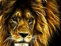 Lion - lions wallpaper