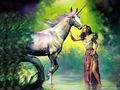 Magical Forest - unicorns photo