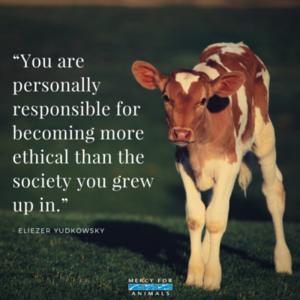 mais Ethical