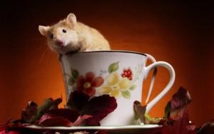 topo, mouse
