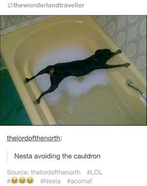 Nesta vs Cauldron