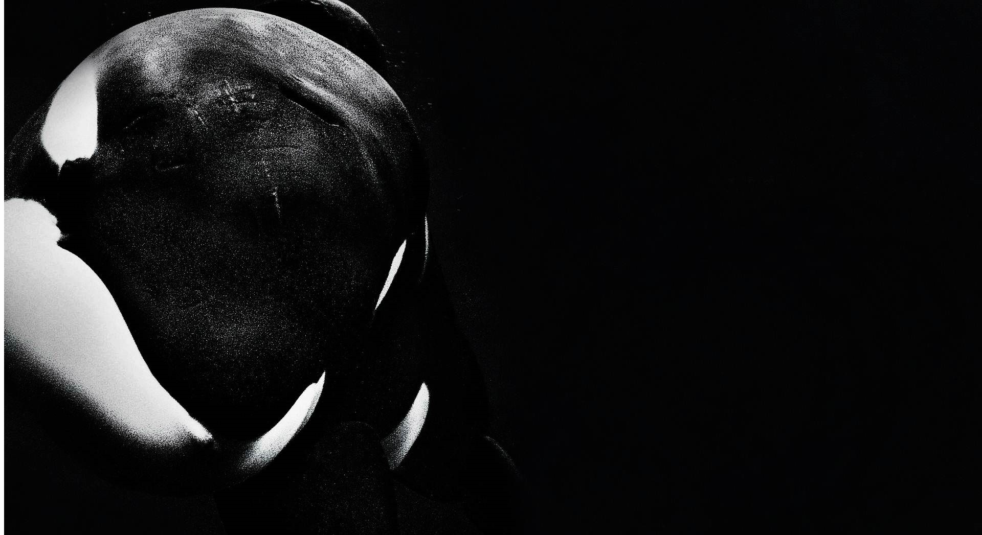 Orca whales images orca hd wallpaper and background photos 40437048 orca whales images orca hd wallpaper and background photos altavistaventures Image collections