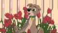 Scamp in the Roses